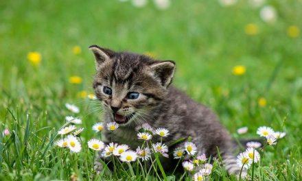 Katzenfütterungsautomat: Darauf sollten Sie beim Kauf achten